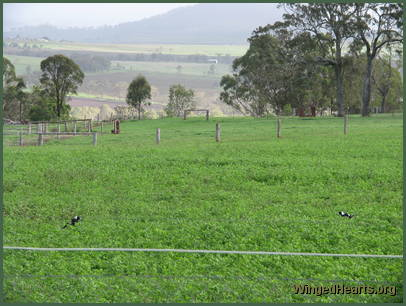 Lush green grasses fill the paddocks